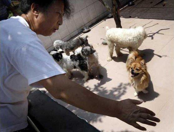 China Quake Dog XAW 5167800