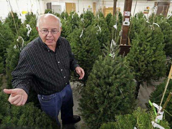 Christmas Trees Now W Heal
