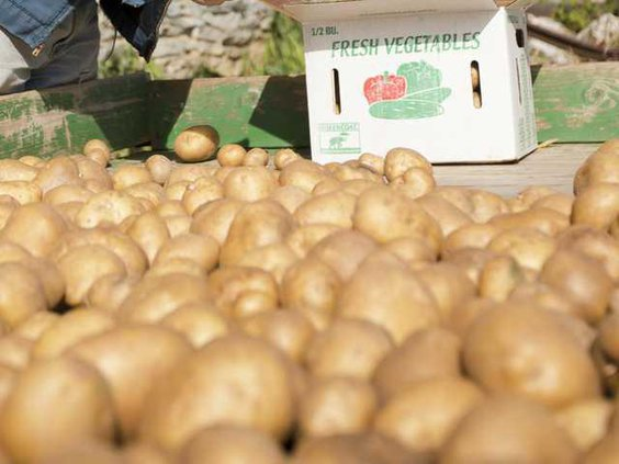 Congress Potatoes Heal