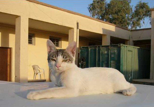 IRAQ CAT LADY OF BA 6030235