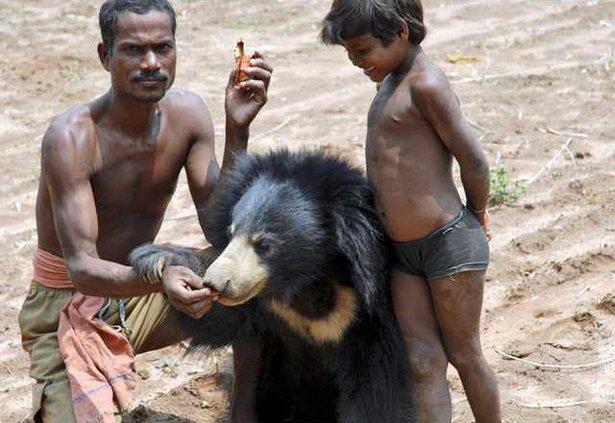 India Bear Misery B 5402511
