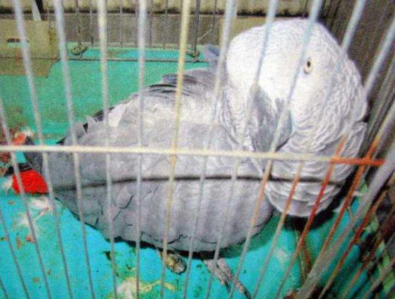 Japan Parrot Return 5093924