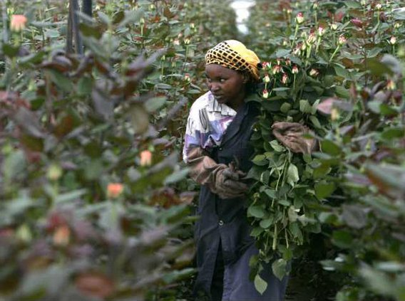 Kenya Flower Fears 5689641