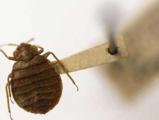 MED Bedbug Superbug Heal