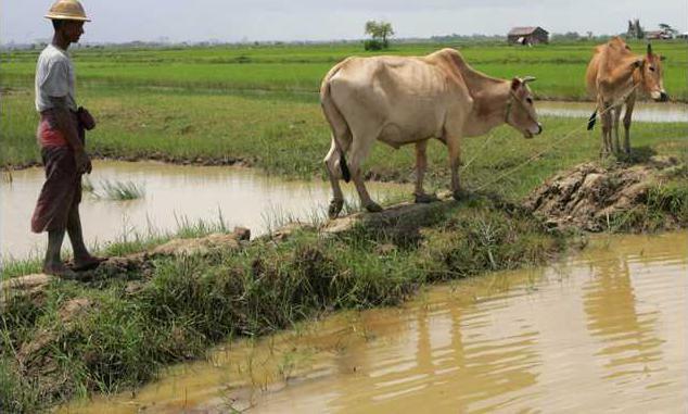Myanmar Farmers Retur Heal
