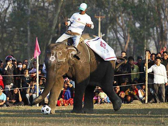 Nepal Elephant Festiv Heal