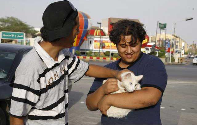 Saudi Dog And Cat B 5439658