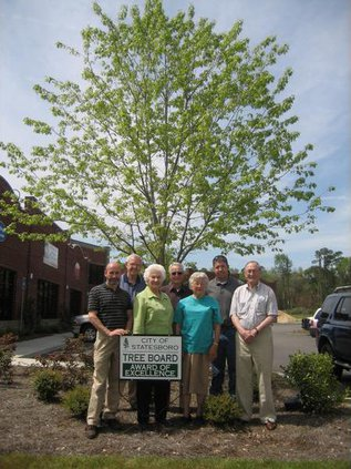 Tree Board Midtown IMG 0731