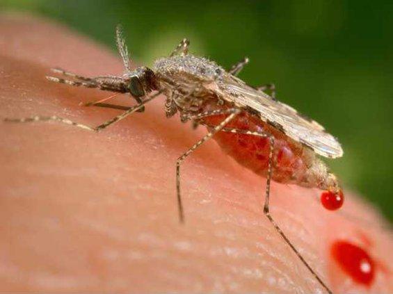 W Mutant Mosquitos Heal