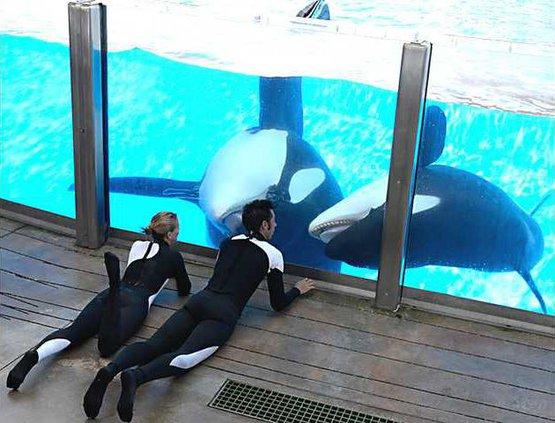 SeaWorld Death Heal