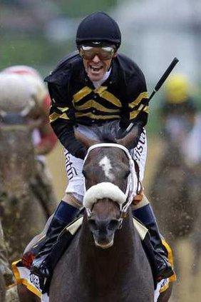 Preakness Horse Racin Heal