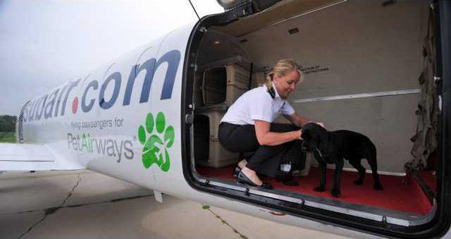 Airlines Pet Airways Heal