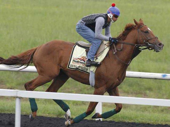 W Preakness Horse Racin Heal