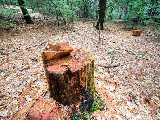W stump