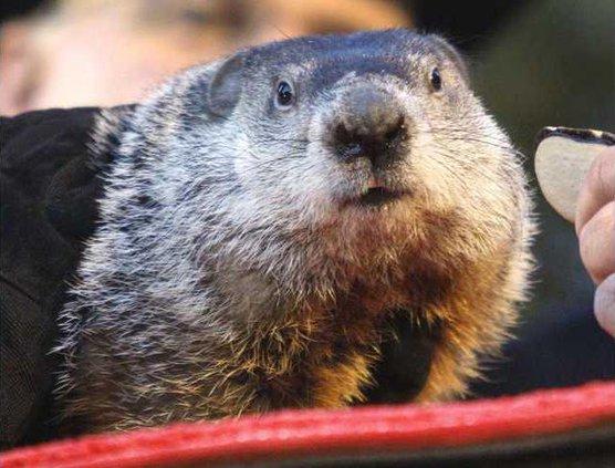 Groundhog Day Heal