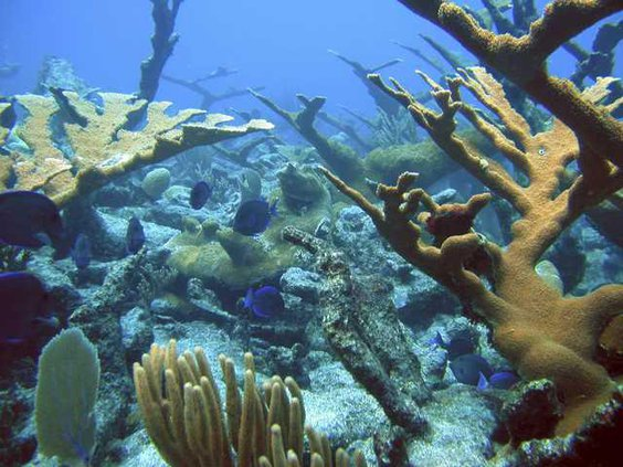 World Without Corals Heal