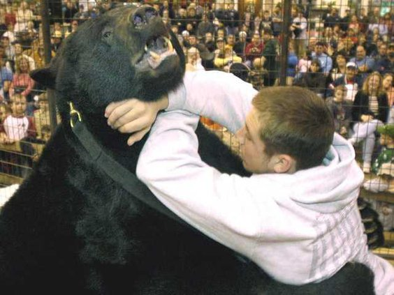 Ohio Bear Attack Heal