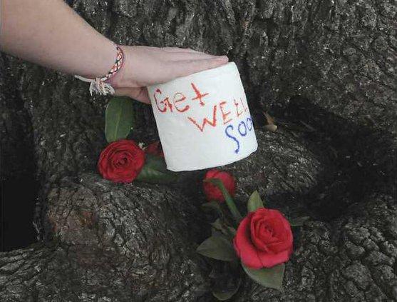 Auburn Trees Poisoned Heal