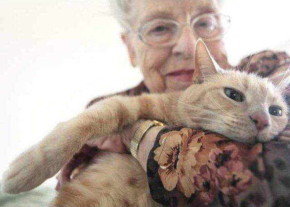 Pets Declawing and De Heal