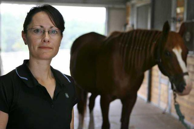 Equine Massage MDJM 5083041