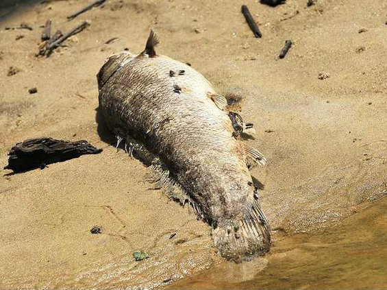Ogeechee fish file Web