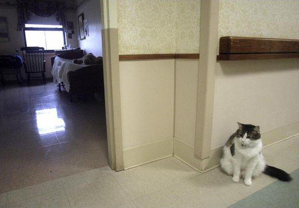 Death Cat RISM104 6868769