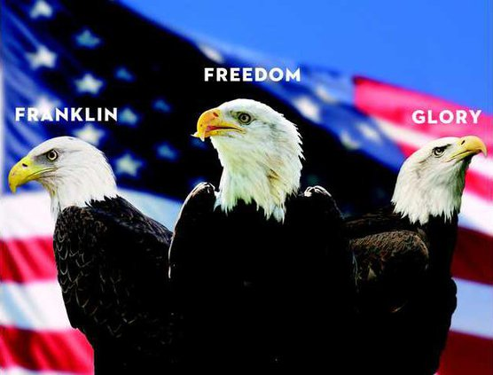 GSU Eagles 1