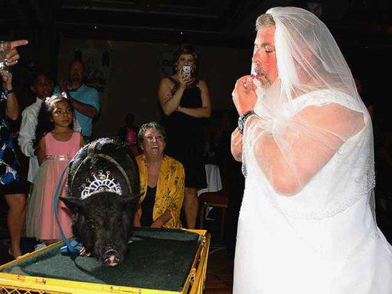 W Kiss a Pig file