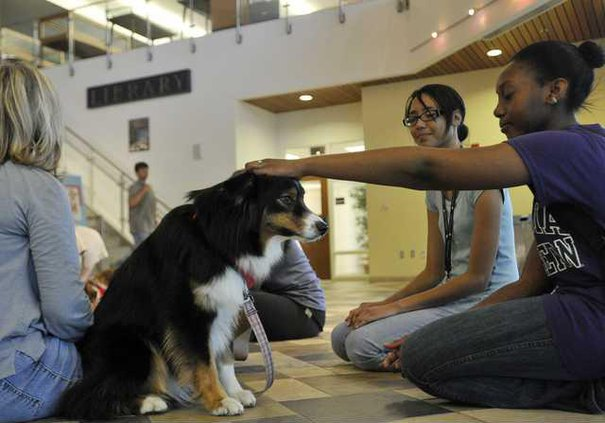 050713 THERAPY DOGS