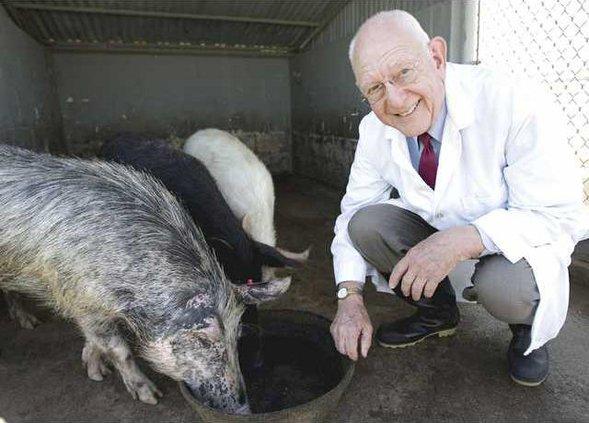Hogs Gone Wild1 web