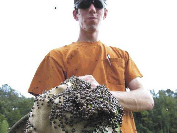 W Kudzu Bugs Heal