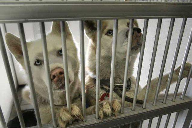 Foreclosure Pets Heal