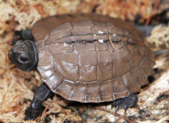 Turtle Alliance