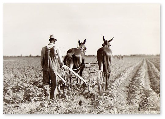 Farmer Plowing 1.jpg
