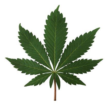 marijuana leaf.jpg