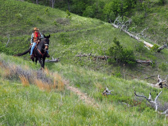 riding a mule
