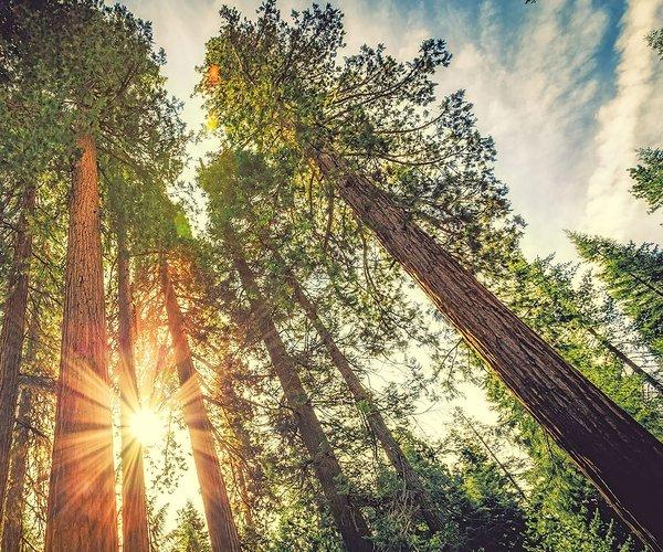 trees light