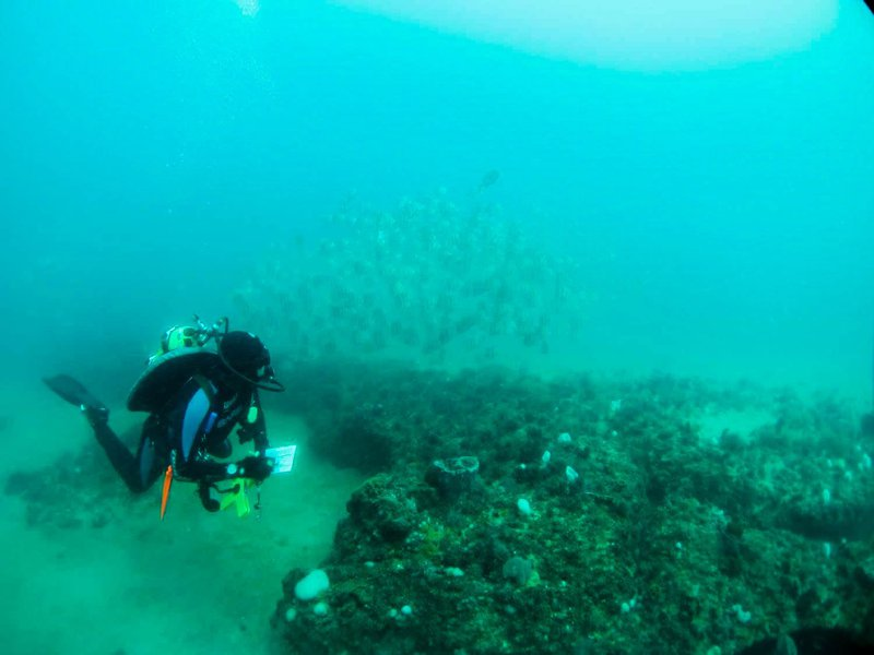 A diver examines fish and sponges at Gray's Reef National Marine Sanctuary.
