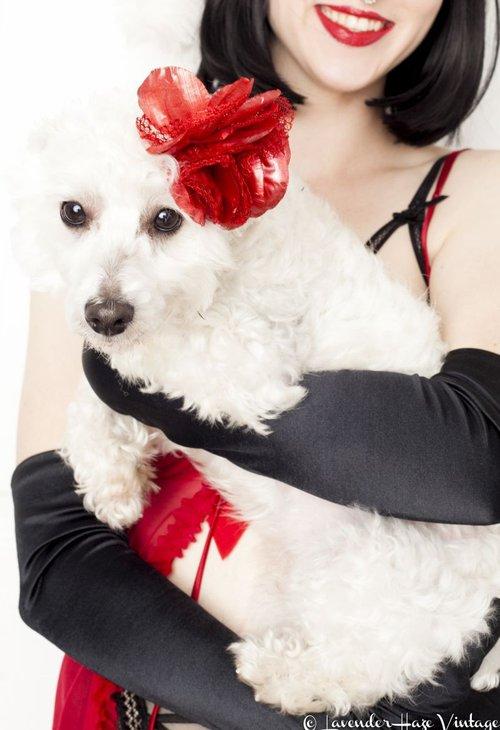 The Ho Ho Holiday show benefits The Humane Society of Savannah.