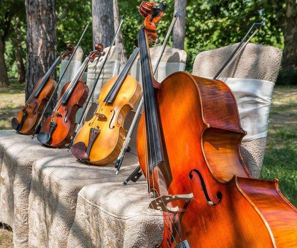 violins_parkok.jpg