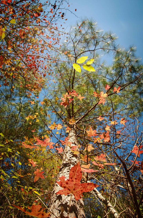 Janet S. Anderson's photo of leaves won honorable mention in the Ogeechee Riverkeeper photo contest.