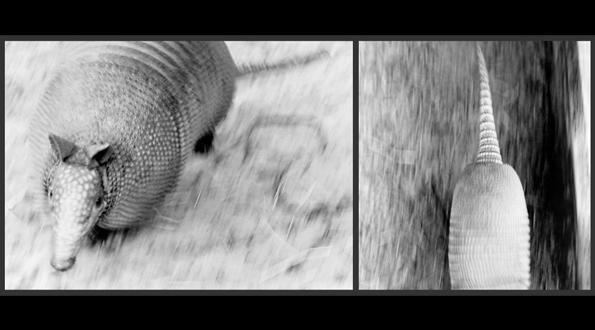 art-waldvogel-24.jpg