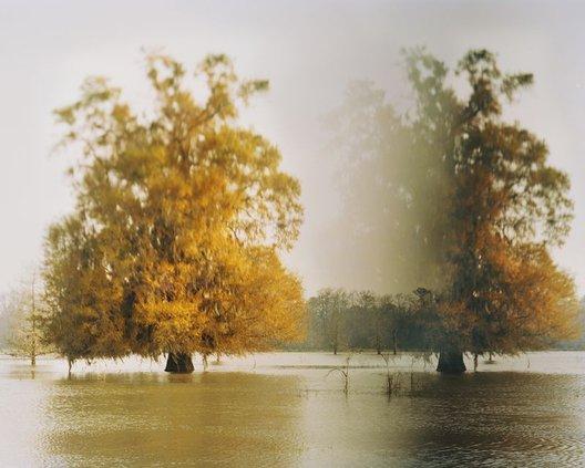 art_beat-disappearing_cypress_trees_altamaha_river_georgia_2014.jpg