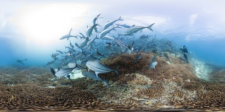 chasing_coral_-_trevally_at_lady_elliot_island_-_photo_by_th.jpg