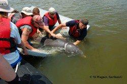 dolphins47-byes.jpg