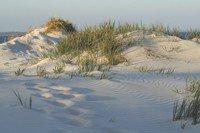 environment-sand_dune.jpg