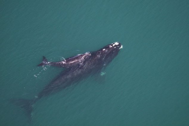 environment-whalegawildliferesourcesdiv-22.jpg