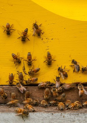 honey1-3.jpg