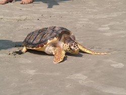 turtles47--p8072956.jpg