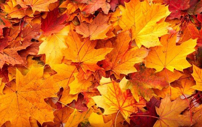 fall_leaves_ii.jpg